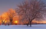 Iced Trees At Sunrise 21203-4