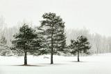 Three Pines 20120215