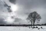 Two Trees DSCF3989