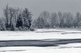 Thawing Rideau Canal 21667