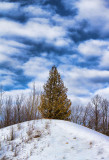 Tree On A Hill 21425