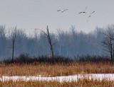 Swans In Flight 21985