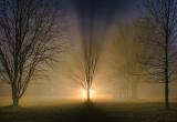 Foggy Night 22211-4