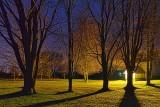 Trees At Night 20120401