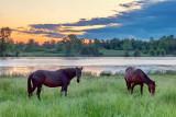 Two Horses At Sunrise 20120606