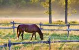 Horse At Sunrise 20120709