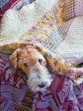 Jasper Undercover 20120804