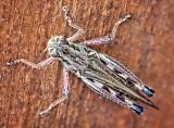 Grasshopper 20120805