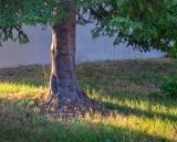 Pine Trunk 01506