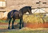 Equine Breakfast 26101