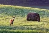Deer & Bale 26266
