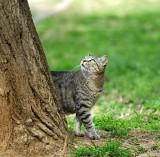 18947 - Neighborhood cat / Ganey-Tikva - Israel