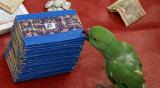 Fortune teller in Nagercoil, Tamil Nadu. The parrot picks three cards out of a pile.