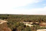 250000 date palms in Siwa