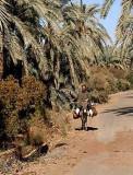 In Bahariya