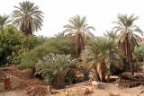 Al Qasr.jpg
