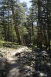 On the Mono Pass Trail