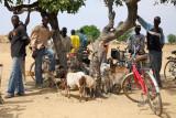 Le marché aux chèvres