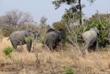 Le déjeuner des éléphants