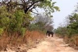 Eléphant solitaire