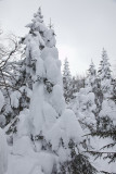 Forêt de Sutton