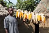 Sélection du maïs pour la semence