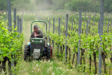 Grooming the vineyard