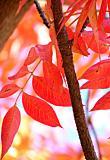 Leaves 9 Vertical Version