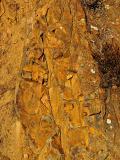 Golden Rocks Mt Diablo