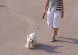 Madame promène son chien