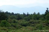 Rhododendron gardens area, Roan Mountain