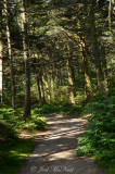 Cloudland Trail to Roan High Bluff