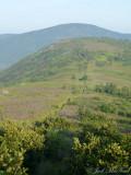 View SW from Grassy Ridge Bald along Appalachian Trail towards Jane Bald (Roan High Knob in background)