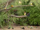 Feeder birds: Salineño, TX