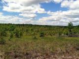 Oak/Jack Pine Savannah: Crawford Co., MI