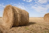 Wrapping up the wheat harvest.jpg