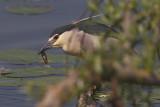 Aironi, Cicogne,  Ibis,  Spatole  (ciconiformes)