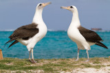 Midway Atoll 2011