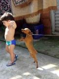 Brincando com o cachorro - 01