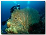 Red sea - Eilat (November_2005)