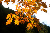 Autumn 2007