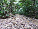 River bed along Trail A, Blue-billed Curassow Reserve / RNA El Paujil