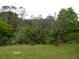 Garden at Chestnut-capped Piha Reserve / RNA Arrierito Antioqueno