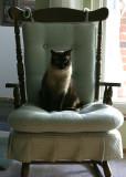 Simone on a chair.jpg
