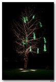 Snowy Green Tree 1-7-8