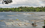 Sampaloc Lake D700_15392 copy.jpg