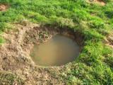 mini-ponds