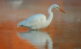Mist at Sunrise: Great Egret
