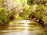 San Pedro River, National Conservation Area