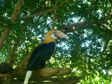This looks like a Toucan but not sure